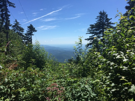 One of the views from Mt. Mitchell